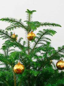 Norfolk Pine greens with vintage ornaments