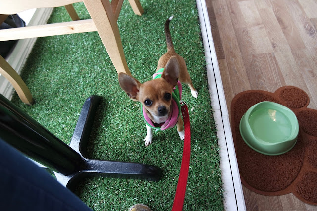 Wags and Whiskers Dog Canine Cafe Stockton