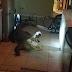 Moradora encontra jacaré de 3,4 metros dentro da cozinha; veja vídeo