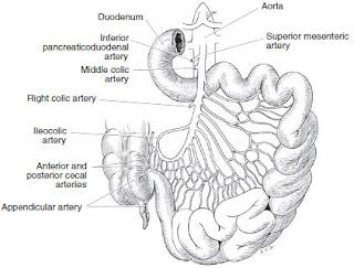 Small Bowel Mesenteric Angina anatomy
