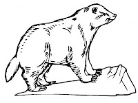Badger Coloring Pages Realistic