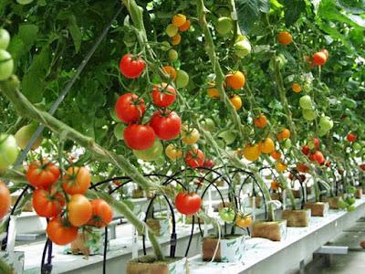 Sản phẩm Hệ thống Nông nghiệp thông minh Nextfarm đã có mặt trên thị trường và giúp người nông dân tăng năng suất lao động, giảm giá chi phí sản xuất