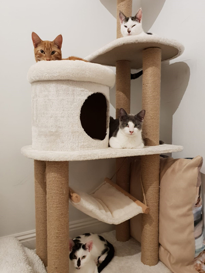 four cats on a scratch post tower