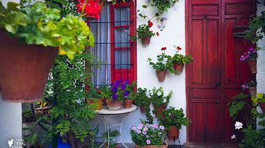 Detalles inspiradores de los Patios de Córdoba para crear nuestro propio oasis