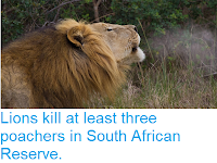 https://sciencythoughts.blogspot.com/2018/07/lions-kill-at-least-three-poachers-in.html
