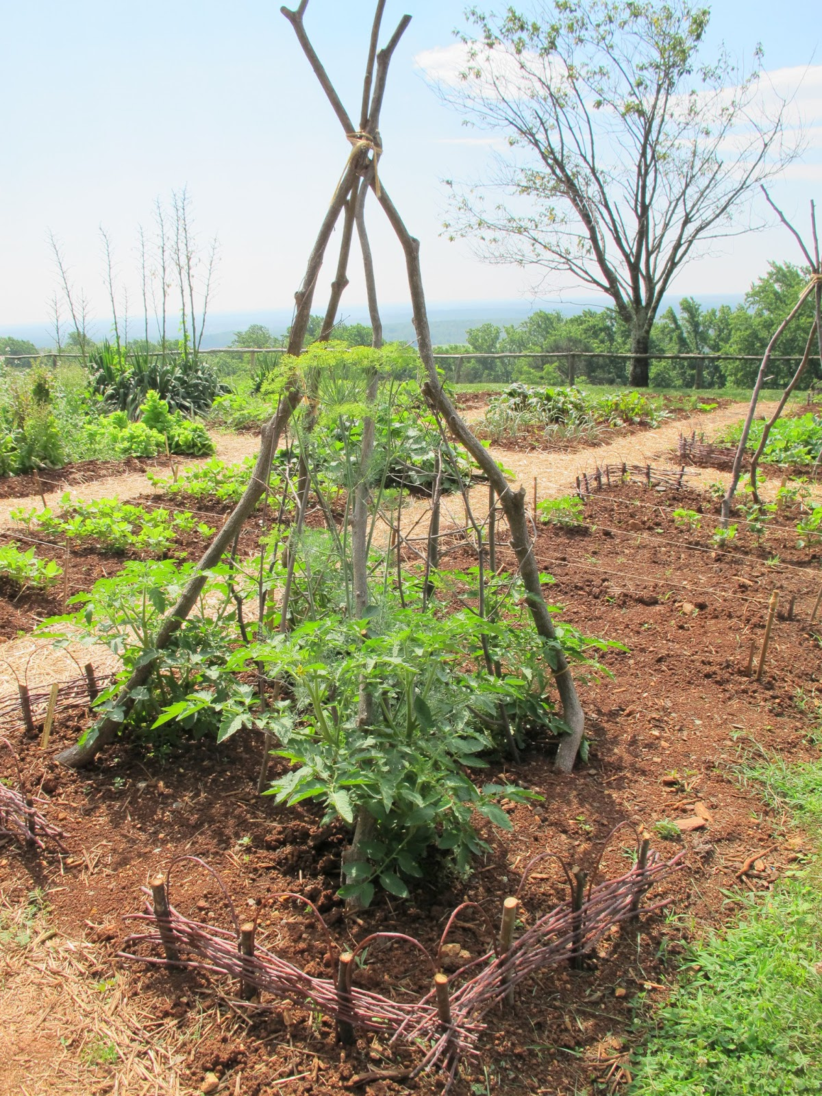 The White House Garden gets support to endure from Burpee ...  |Thomas Jefferson Garden Seeds