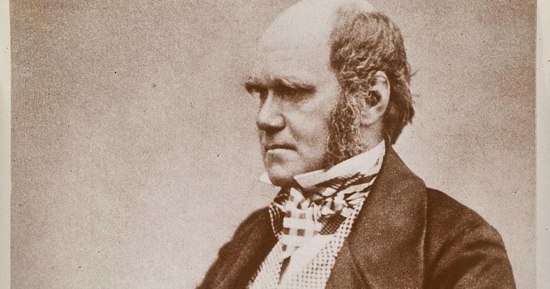 charles darwin theory of natural selection essay