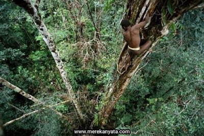 Suku Korowai Sedang Memanjat Rumah Pohon Mereka.jpg