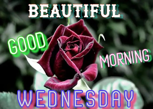 81+ Best Good Morning Wednesday Images for Whatsapp