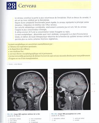 Télécharger Livre Gratuit Cerveau pdf