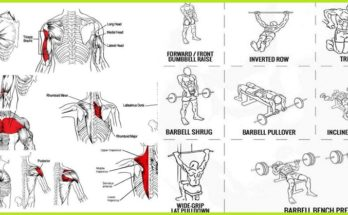 Upper Body Exercises' Are Crucial for Body