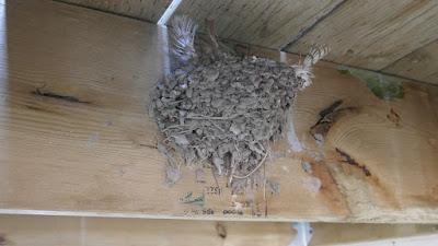 Cypress Hills, Alberta, wildlife, birds, Eagle Butte