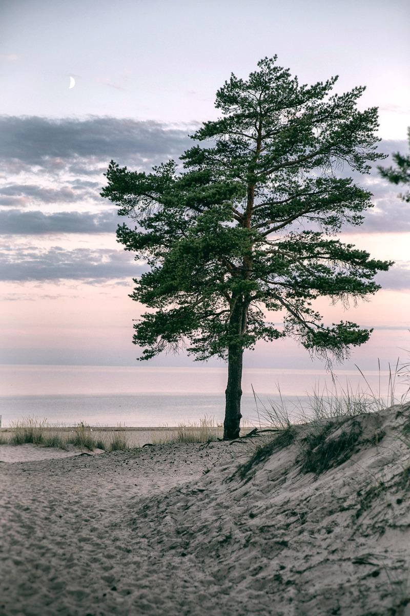 Pori, Yyteri, ranta, beach, sand, evening, summer, visitpori, visitfinland, Visualaddict, valokuvaaja, Frida Steiner, heinät, nature, luonto, naturephotography, naturelovers, luontokuva, mänty, puu, kasvillisuus,