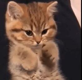 صور قطط مضحكة , صور قطط متحركة gif
