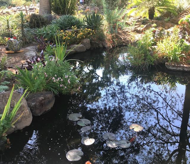 ruth bancroft garden pond