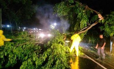 Hujan Disertai Angin Kencang Robohkan Pohon, Rumah dan Baliho Rusak, Tim BPBD Langsa Turun Tangan