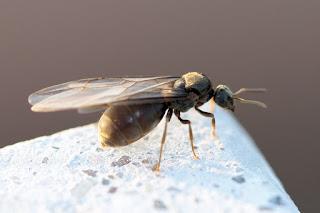 Ricerca sulle formiche, come sono fatte, come si organizzano