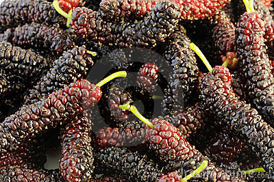 Image result for mulberry in india