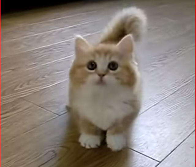 gambar kucing lucu dan imut banget ab001c