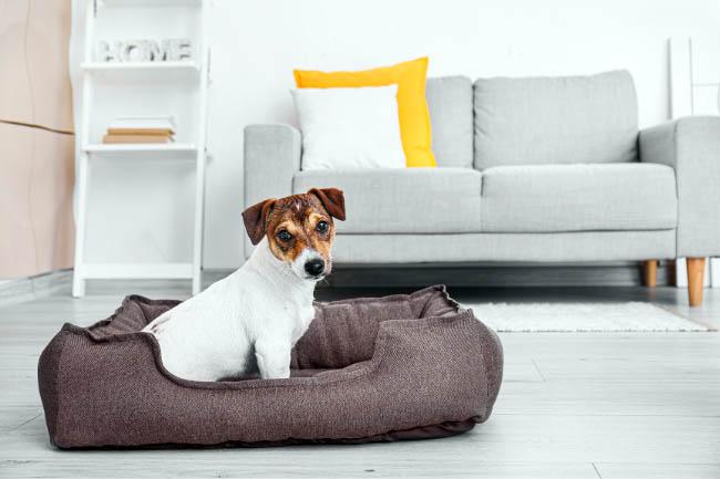 Gdzie w domu umieścić legowisko dla psa?