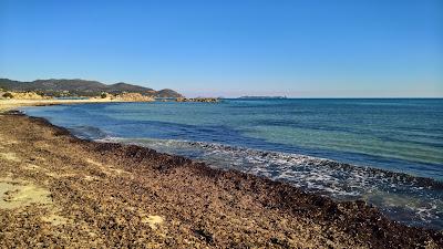 Debris from Mediterranean seagrass.
