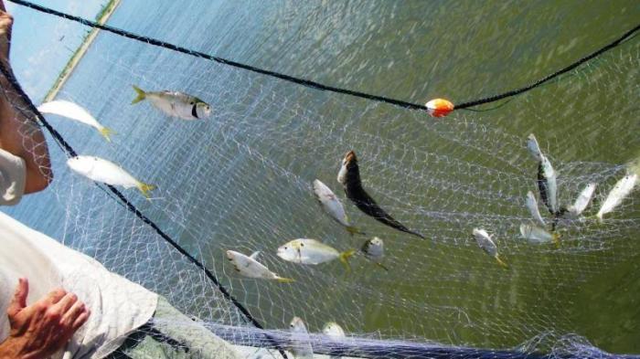 Jual Jaring Ikan Surabaya Dan Sekitarnya