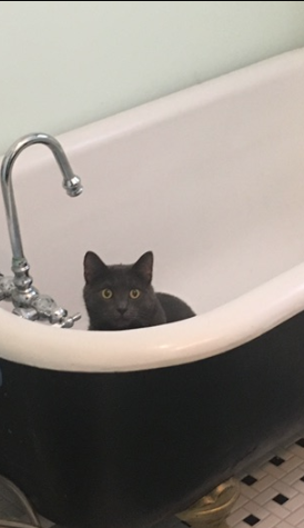 cat in Sears clawfoot tub