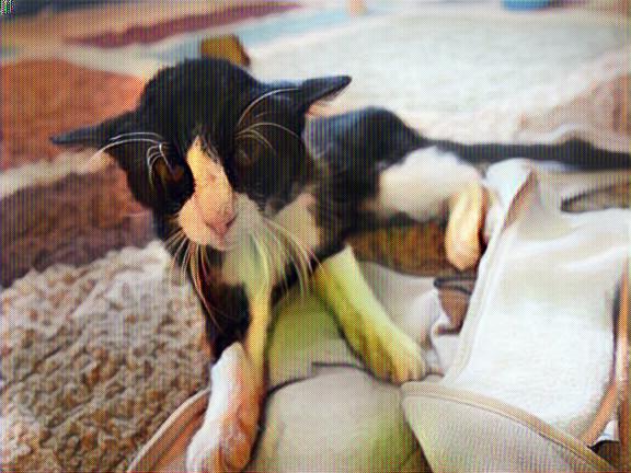 Gato Dexter al llegar a su nuevo hogar