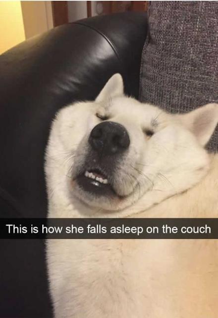 Best Dog Memes Viral Online 12