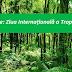 29 iunie: Ziua Internațională a Tropicelor