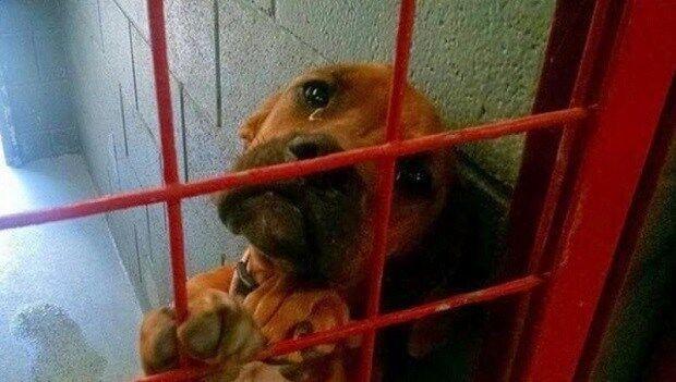 Фото собаки разлетелось по Сети и через один день ее жизнь кардинально изменилась