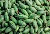 परवल के फायदे और उपयोग (Pointed Gourd or Parwal Benefits and Uses in Hindi)