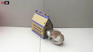 Cara membuat rumah kucing dari limbah kardus bekas