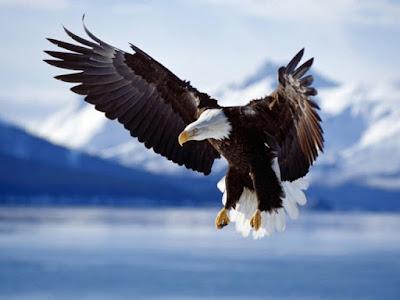 Chúa tể bầu trời và Nguyên tắc sống | Chim Đại Bàng