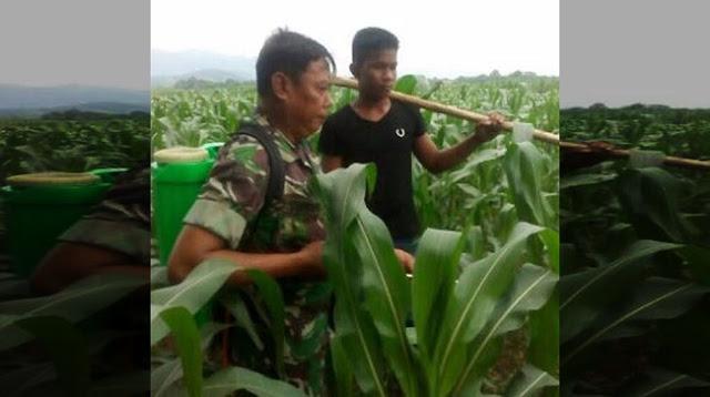 Babinsa Gantang Bantu Petani Basmi Hama di Desa Lau Rempak