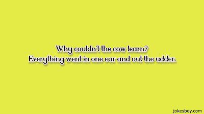 funny cow puns