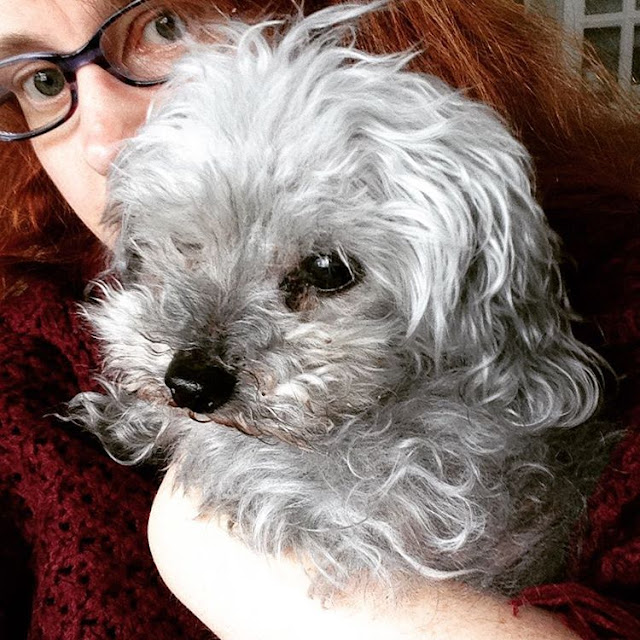 A square photo of a fluffy, scruffy grey poodle held in a red-haired white person's arms. The dog has bright eyes and a very black nose, both of which stand out against his silver hair. His fluffy cheeks are a bit dirty.