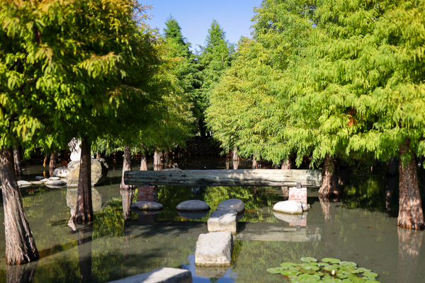 台中后里泰安羽粼落羽松有蜻蜓、老車和水池造景,美照拍不停