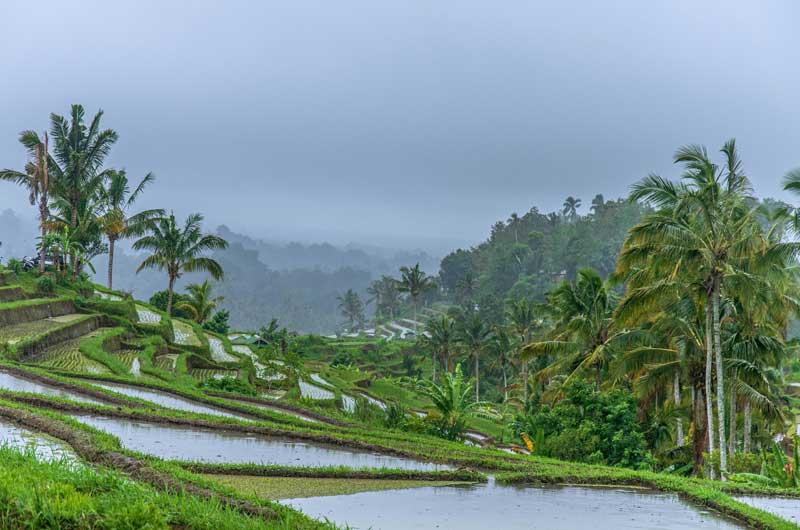 Rute Lokasi Terasering Padi Jatiluwih Bali
