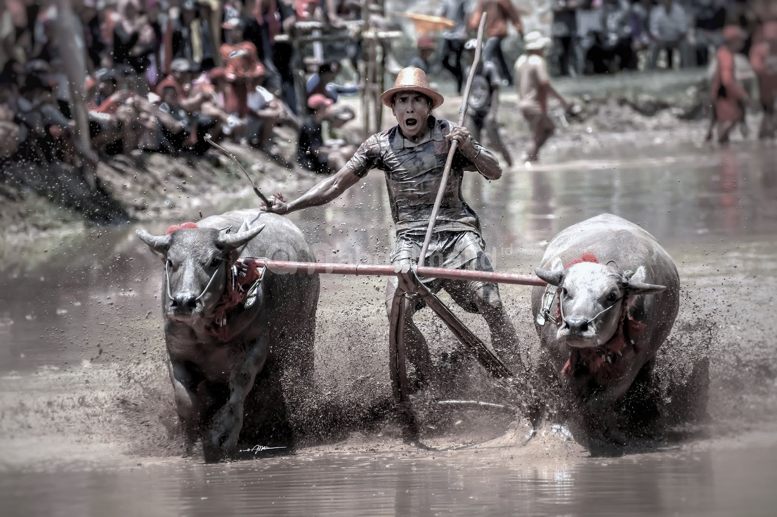 budaya-unik-sumbawa-barat