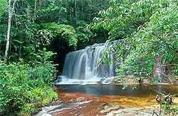 Recursos Naturais e Conservacionismo
