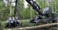 Bialowieza, el último bosque virgen de Europa, está siendo destruído