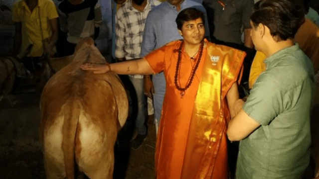 Lawan Peringatan Dokter, Politisi India Ajak Warga Minum Kencing Sapi agar Tak Kena Covid
