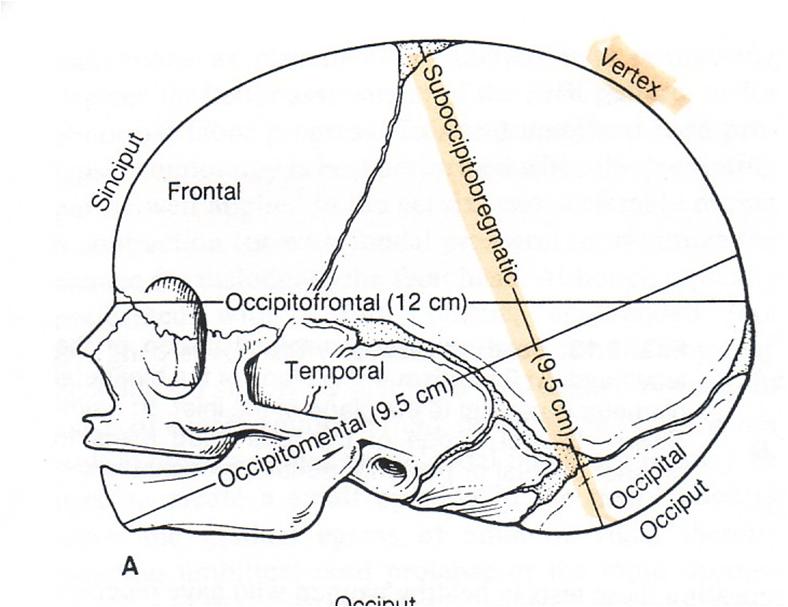 MBBS Medicine (Humanity First): Fetal skull