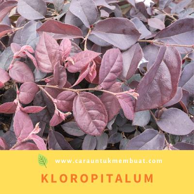 Kloropitalum