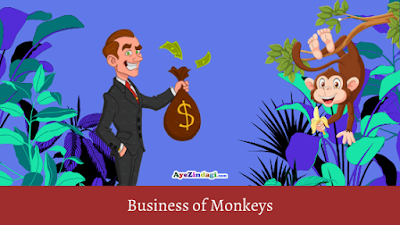 story of monkey business