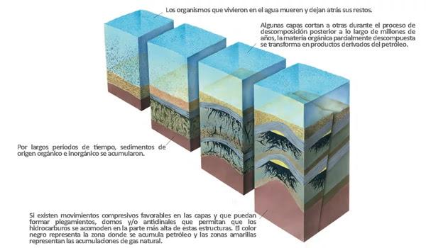 Origen de los Hidrocarburos - Esquemático de la formación de Materia Orgánica