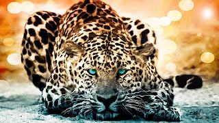 Jaguar nice 3d wallpapers for desktop
