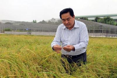 TS Dương Văn Chín, Chủ tịch Trung tâm Nghiên cứu nông nghiệp Định Thành (Tập đoàn Lộc Trời). Ảnh: Nông nghiệp