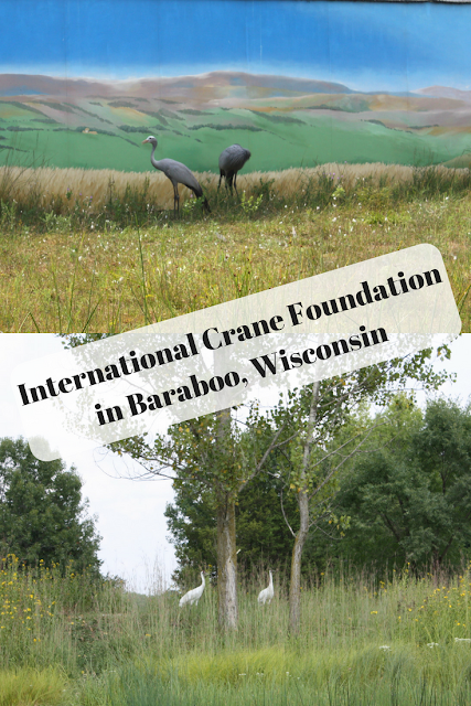 Conservation in Action at the International Crane Foundation in Baraboo, Wisconsin Saving Cranes Worldwide